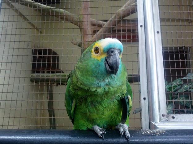 Парк птиц Куала-Лумпура
