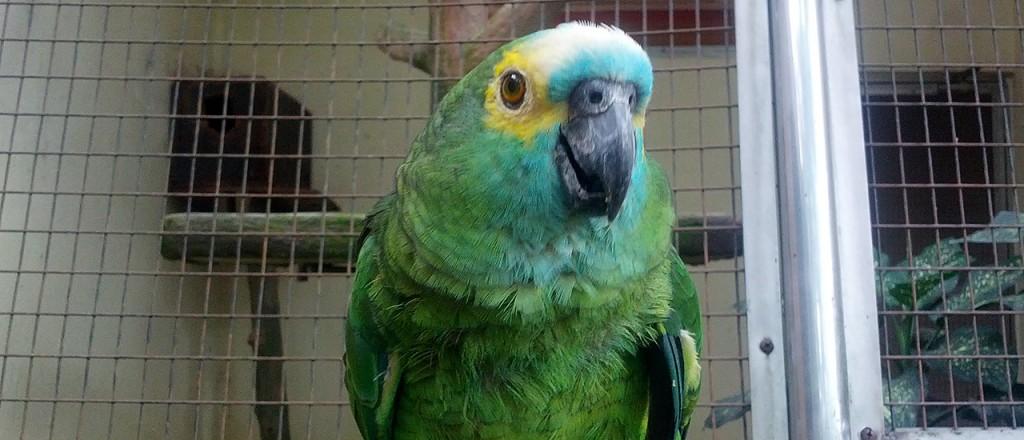 Парк птиц (Bird Park). с метками.  Стас.  Видео.  Куала-Лумпур (Kuala Lumpur).  Достопримечательности.