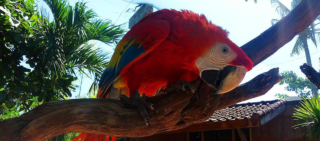 Парк птиц Гили Мено